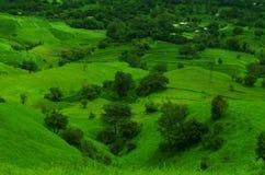Gräsplanfält på ett berg slope-2 Arkivfoto
