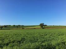 Gräsplanfält som planteras med vete, innan att skörda Arkivfoto