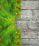 Gräsplanfilialer av granen på träbakgrunden. Royaltyfri Bild