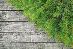 Gräsplanfilialer av granen på träbakgrunden. Royaltyfri Fotografi