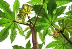 Gräsplanfilialer av växter blommar träd som ser upp på en vitisolator Royaltyfria Bilder