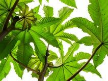 Gräsplanfilialer av växter blommar träd som tillbaka ser upp på en vit Royaltyfri Foto