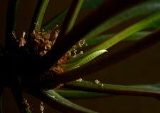 Gräsplanmonster-sidor makro Royaltyfria Bilder