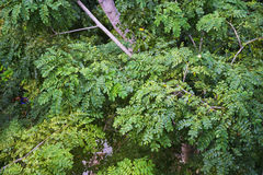 Gräsplansida-/växttextur med naturen Fotografering för Bildbyråer