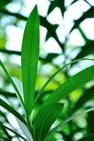 Gräsplansidor royaltyfria bilder