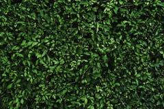 Gräsplansidor Arkivbilder