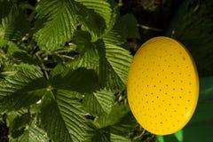Gräsplansidor av jordgubbar och trädgården som bevattnar kan trädgårds- arbeta i trädgården springtimehjälpmedel Royaltyfria Foton