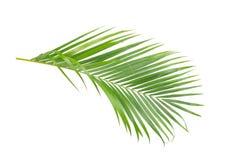 Gräsplansidor av palmträdet royaltyfria bilder