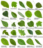 Gräsplansidor av träd och buskar med namn Royaltyfri Foto