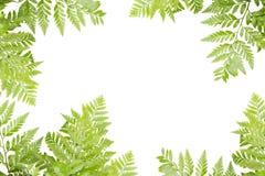 Gräsplansidor för ram på vit bakgrund, naturgräns royaltyfri foto