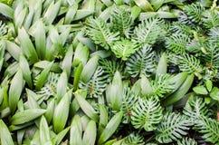 Gräsplansidor i den berömda Singapore botaniska trädgården Royaltyfri Bild