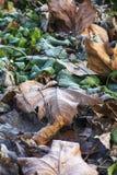 Gräsplansidor i snö Royaltyfria Bilder