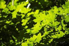 Gräsplansidor i solen i mitt av våren Royaltyfri Bild
