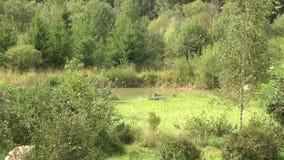 Gräsplansidor i trädgården Inte väl underhållen fruktträdgård Landslandskap med den lilla skogsjön i sommartid stock video
