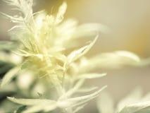Gräsplansidor mönstrar tropisk makro för bakgrundsCloseup av naturen arkivfoton
