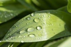 Gräsplansidor med droppar av dagg eller regn, härlig bakgrundsima Fotografering för Bildbyråer