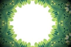 Gräsplansidor med kalejdoskopet verkställer, gör sammandrag färgnaturen fra Arkivbilder