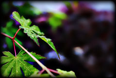 Gräsplansidor med purpurfärgad bokahbakgrund Royaltyfria Foton