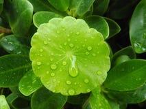 Gräsplansidor med regndroppar Royaltyfria Foton