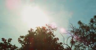 Gräsplansidor med solen ray, skogträd Gröna solljusbakgrunder för natur Royaltyfri Fotografi