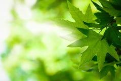 Gräsplansidor med solen rays, den mycket grunda fokusen Arkivbilder