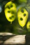 Gräsplansidor med solpanelljuset royaltyfri fotografi