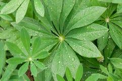 Gräsplansidor med vattendroppar efter regn Arkivbilder
