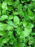 gräsplansidor, naturlig bakgrund, lös växt Arkivfoton