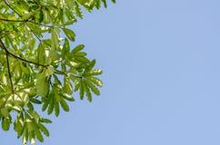 Gräsplansidor och blå himmel i middag arkivfoton
