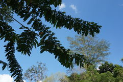 Gräsplansidor och ljus himmel Royaltyfria Bilder