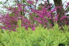Gräsplansidor och rosa färgblommor royaltyfri fotografi