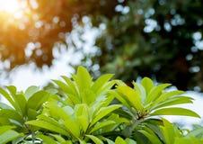 Gräsplansidor och suddighetsbakgrund med solnedgång tänder Arkivfoton