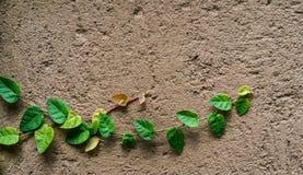 Gräsplansidor på den bruna väggen Arkivbild