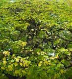 Gräsplansidor på en buske royaltyfri foto