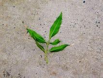 Gräsplansidor på gatan Arkivfoton