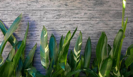 Gräsplansidor på konkret bakgrund Royaltyfri Bild