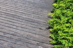 Gräsplansidor på träplankabakgrund royaltyfri bild