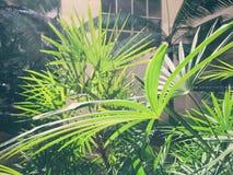 Gräsplansidor reflekterar Arkivbild
