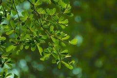 Gräsplansidor som används som bakgrund Arkivfoto