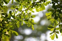 Gräsplansidor som används som bakgrund Fotografering för Bildbyråer