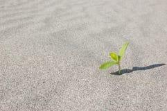 Gräsplansidor som växer på trädstammen Royaltyfria Foton