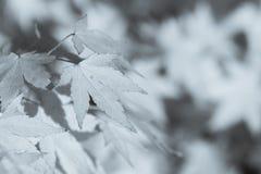 Gräsplansidor som växer på trädstammen Arkivfoton