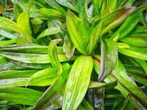 Gräsplansidor, vattendroppar royaltyfria foton