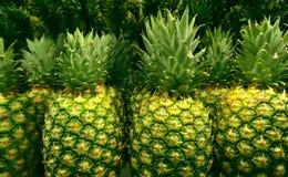 Gräsplanstjälk av ananas bär frukt i linje på supermarket ställer ut Arkivbild