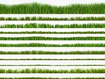 grässet Fotografering för Bildbyråer