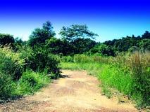 Grässkog och blå himmel Arkivfoton