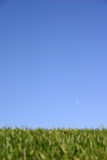 grässky arkivfoton