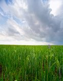 grässky för jord 4 Royaltyfri Bild