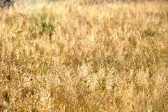 grässlätt Arkivfoton