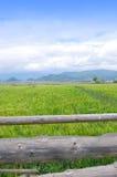 grässlätt Arkivbilder